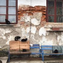 Nowa Wieś 9